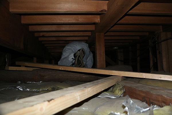ネズミ駆除作業風景 屋根裏3