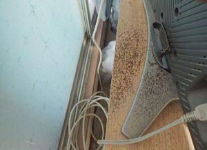 アメリカカンザイシロアリの糞2