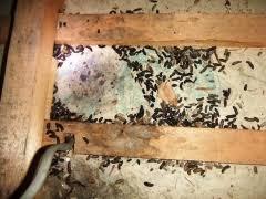 ネズミ被害 糞