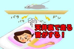 天井裏を走るネズミ