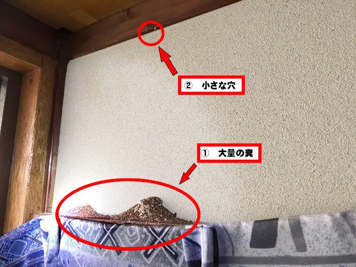 アメリカカンザイシロアリの糞