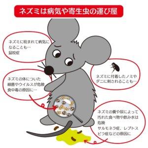 ネズミは病気や寄生虫の運び屋