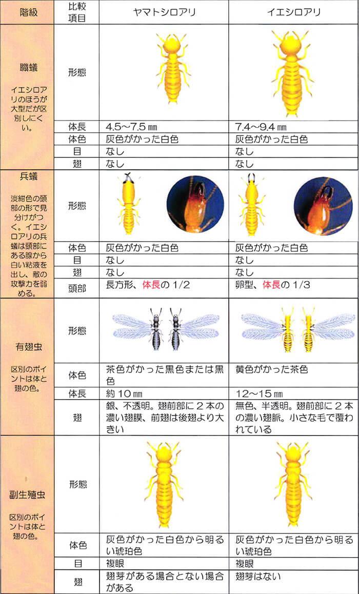 ヤマトシロアリとイエシロシロアリの比較