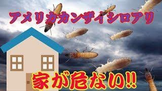 史上最強のシロアリが襲ってくる 動画サムネイル