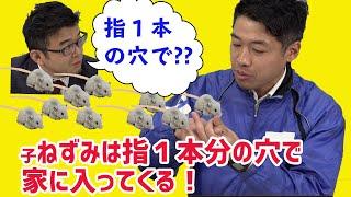 子ネズミは指1本分の穴で家に入ってくる 動画サムネイル