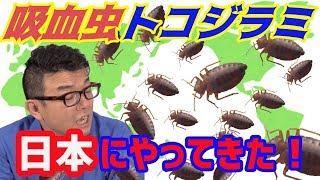 南京虫大発生!海外からやってくる 動画サムネイル