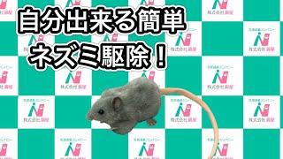 自分で出来る簡単ネズミ駆除 動画サムネイル