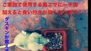 ネズミ駆除毒餌作り 動画サムネイル