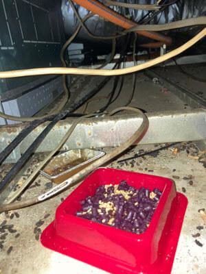 ネズミ駆除毒餌設置