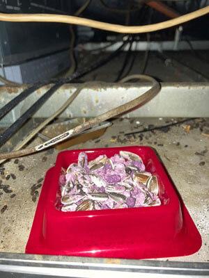 ネズミ駆除用毒餌設置